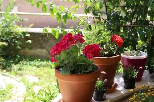 Sommerblumen: 6 Ideen für deinen Garten