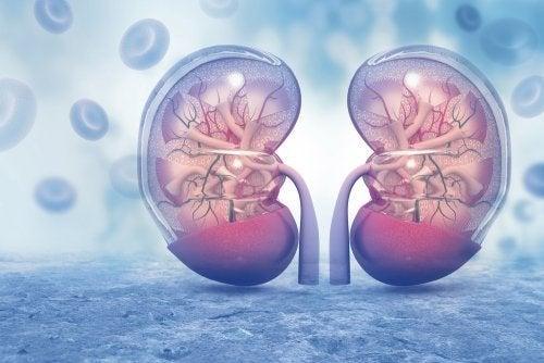 Amlodipin und Niereninsuffizienz