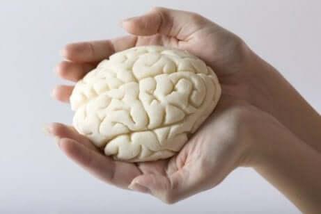 Wissenswertes über den Aufbau der Gehirnlappen