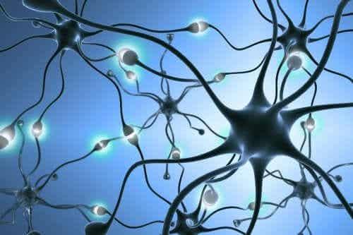 Neurogenese: Wie entstehen neue Nervenzellen?