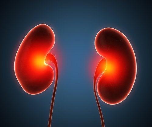 Nierenabszess: Ursachen und Behandlung