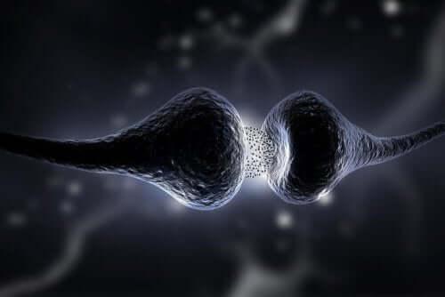 Wie wirkt Sertralin im Körper?