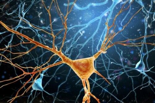 Wie funktioniert die Neurogenese?