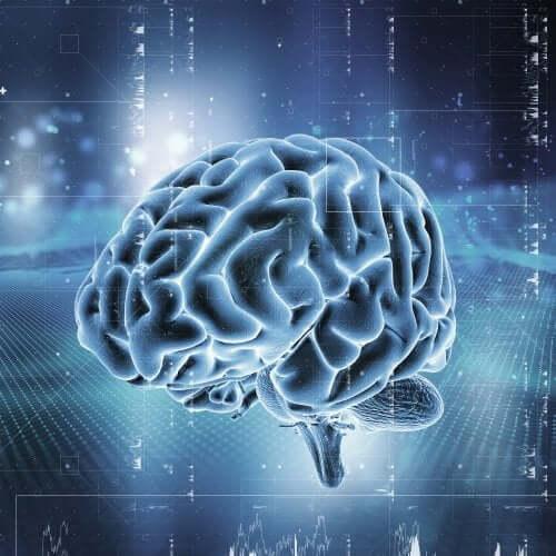 Wie funktioniert das Belohnungssystem im Gehirn?