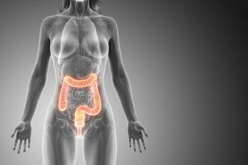 Schematische Darstellung des Darms bie einer Frau