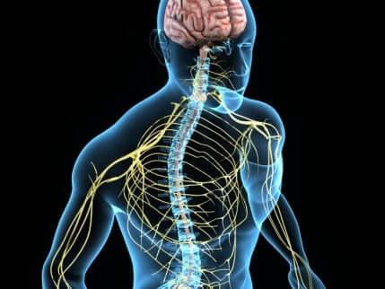 Division der zervikalen Spinalnerven