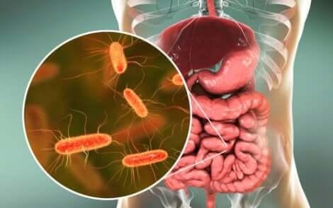 Bakterien in öffentlichen Toiletten