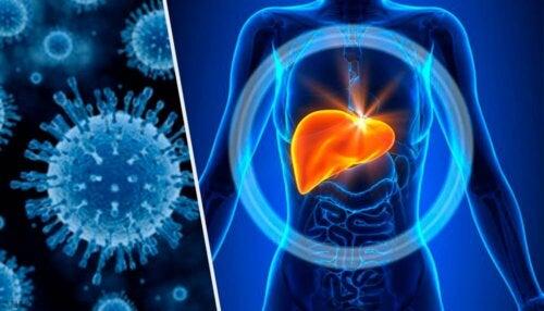 Leberstoffwechsel und Leberfunktionstests