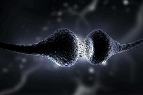 synapsen und neuroplastizität