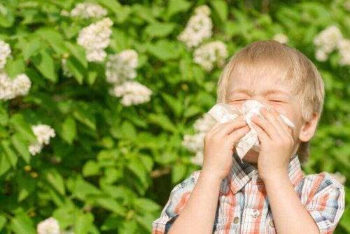 Kind Niesen Allergie
