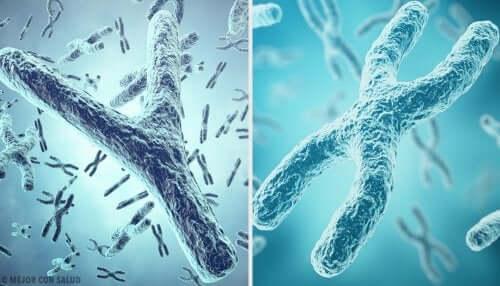 Geschlecht Chromosom