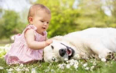 Zeige deinem Kind, wie es sich verhalten kann, um seine Angst vor Tieren zu überwinden