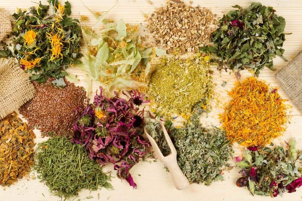 15 nützliche Arzneipflanzen und ihre Wirkung