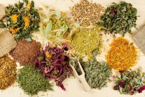 nützliche Arzneipflanzen
