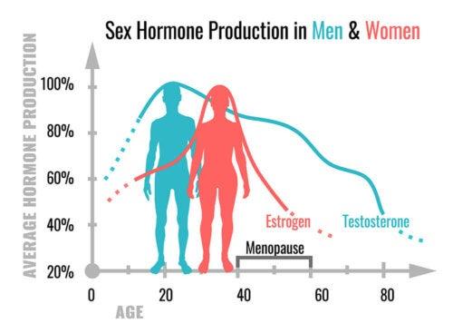 Die Funktionen der Sexualhormone