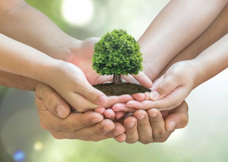Umweltschutz zu Hause: 10 Tipps