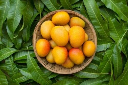 Mango und Körpergewicht