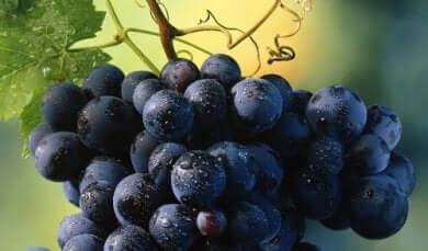 Weintrauben und Körpergewicht