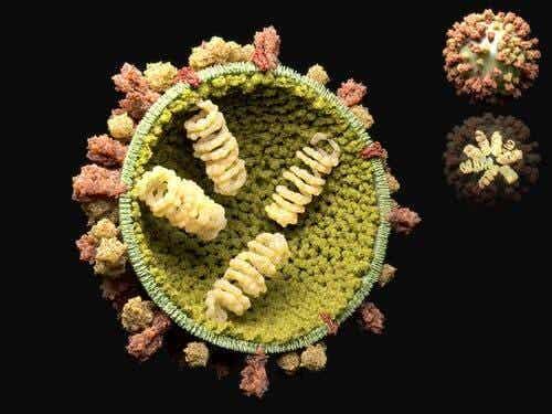 Die Vermehrung von Viren