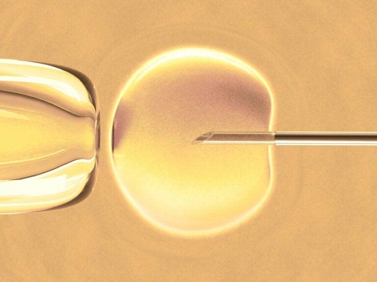 Wissenswertes über die In-vitro-Fertilisation