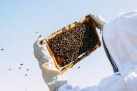 Bienenprodukt Gelée Royale