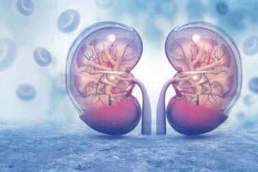 Wie wirkt sich COVID-19 auf die Nieren aus: Wissenschaftliche Studien