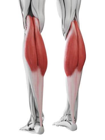 Darstellung der Wadenmuskeln