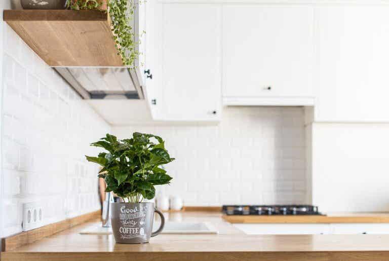 Küchenkräuter richtig pflegen: hilfreiche Tipps