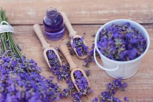 Entspannung mit Lavendel: 5 Tipps