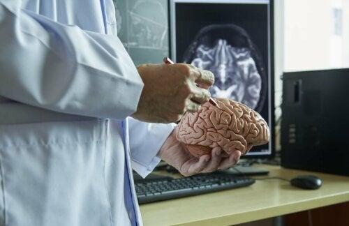 Arzt erklärt durch Multiple Sklerose betroffene Gehirnbereiche