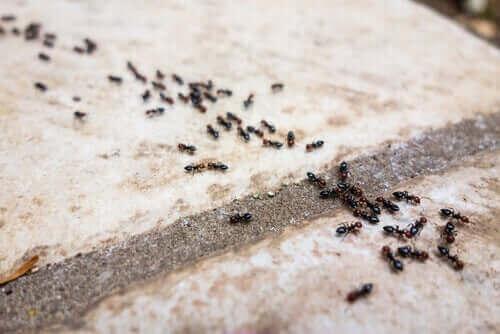 Ameisenschutzmittel - Ameisenstraße
