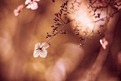 Erlaube dir - Bild einer Blume