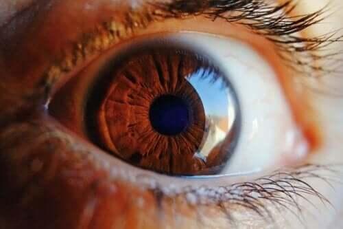 So funktioniert die Selbstreinigung des Auges