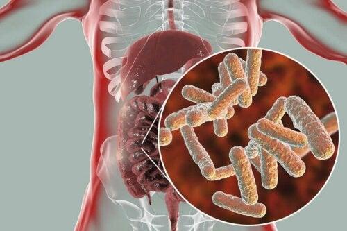 Wie sieht die Zusammensetzung der normalen Mikrobiota aus?