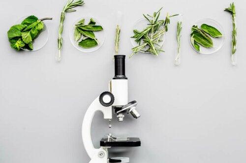Was sind gentechnisch veränderte Lebensmittel?