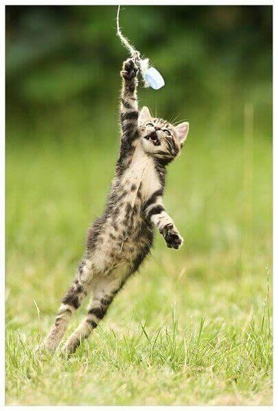 resilient sein - spielende Katze