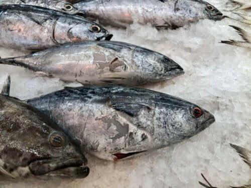 heruntergefallene Lebensmittel - gefrorener Fisch