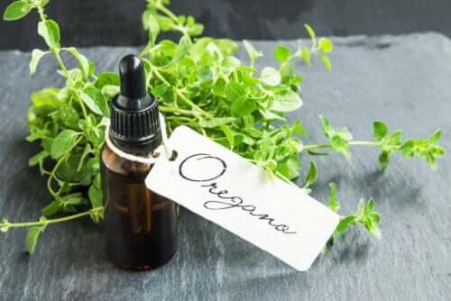 Wie du Oreganoöl selber machen kannst und welche Vorteile es hat