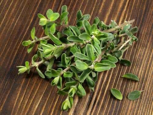 Entdecke die Heilpflanze Majoran