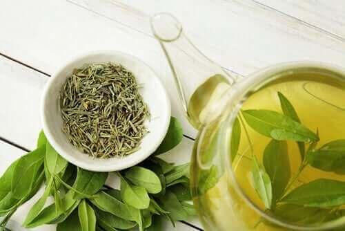 Wusstest du, dass grüner Tee die Lebensdauer verlängert?