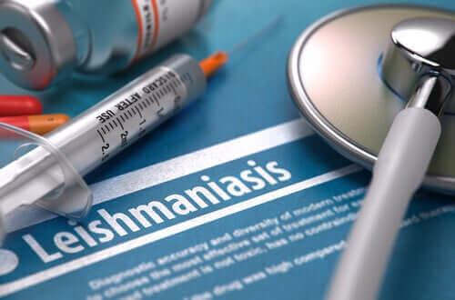 Ist Leishmaniose ansteckend?