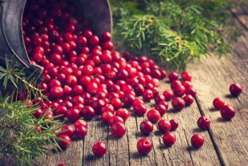 Lebensdauer - Cranberries