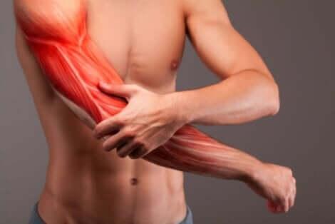 Sarkopenie führt zu einer fortschreitenden Zerstörung der Muskeln