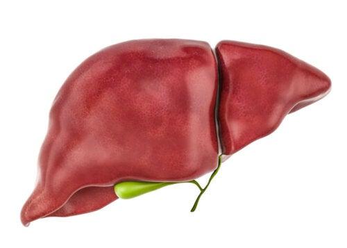Toxine in der Leber