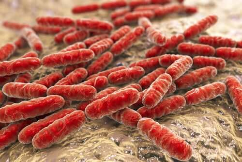 Probiotika für Babys