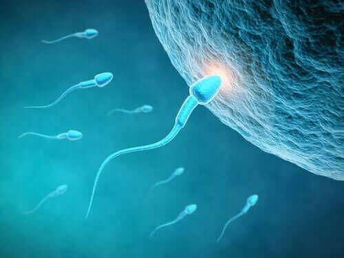 Spermienqualität und Ernährung: Welchen Zusammenhang gibt es?