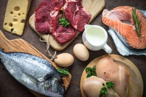 Warum ist die Proteinzufuhr so wichtig?