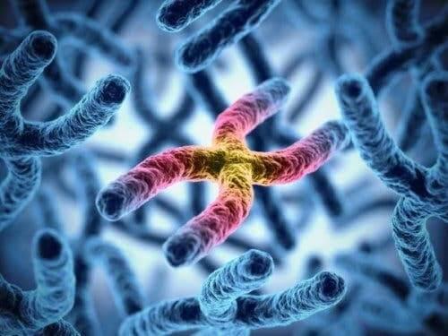 Farbenblindheit - Chromosomen