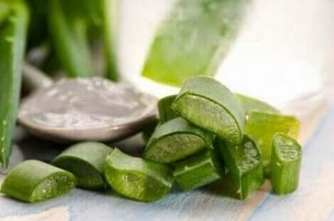 Aloe Vera hilft gegen das seborrhoische Ekzem