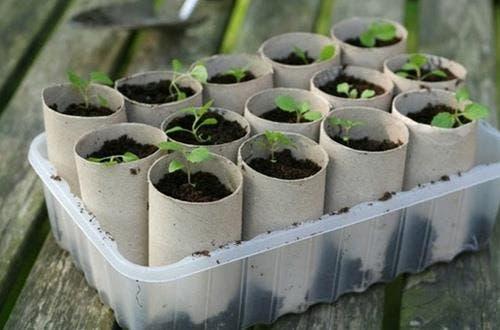 Gewürzpflanzen: Saatgut oder Pflanzen?
